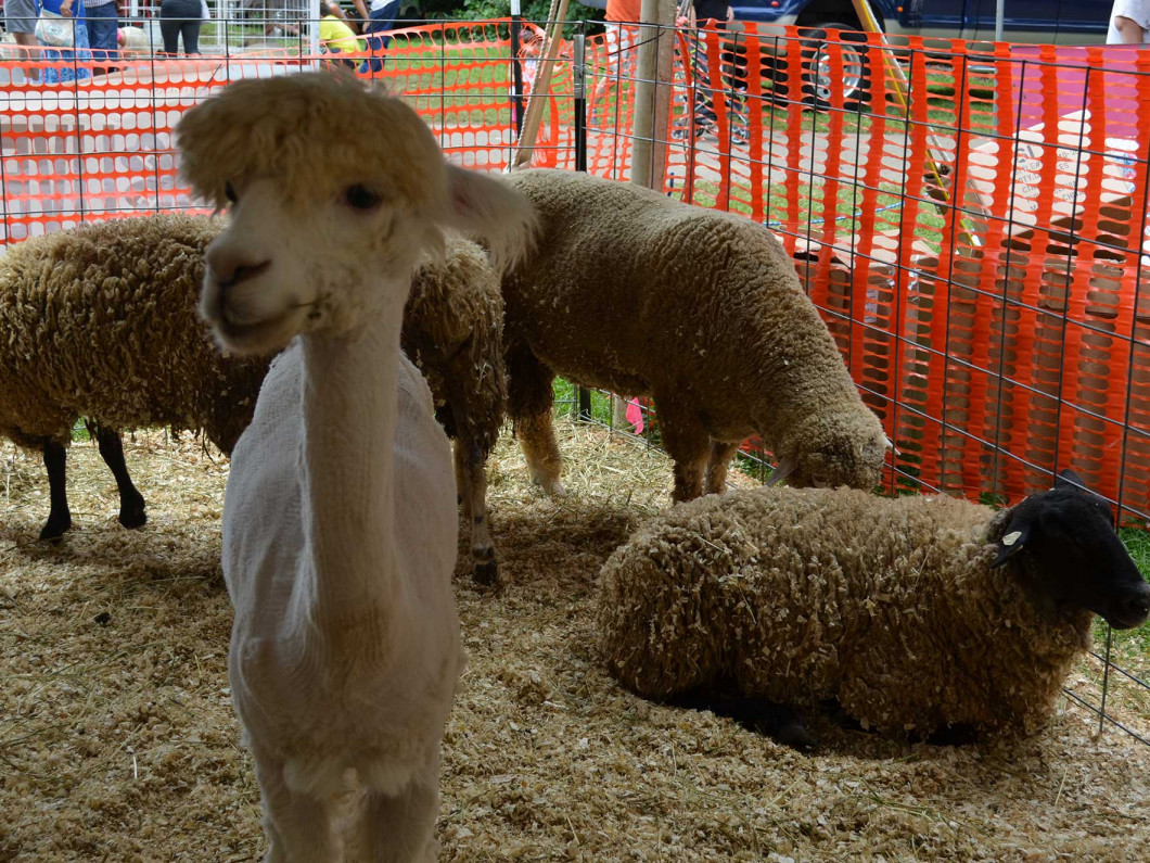 Vendors and Exhibits offered by Middlesex County Fair Association